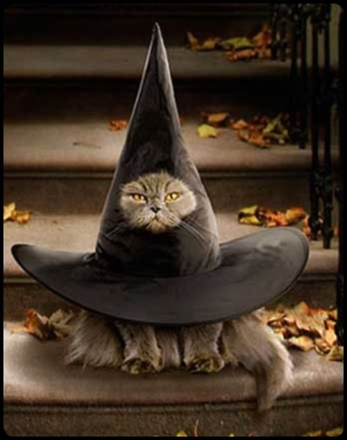 Witch Hat Cat Costume For Halloween