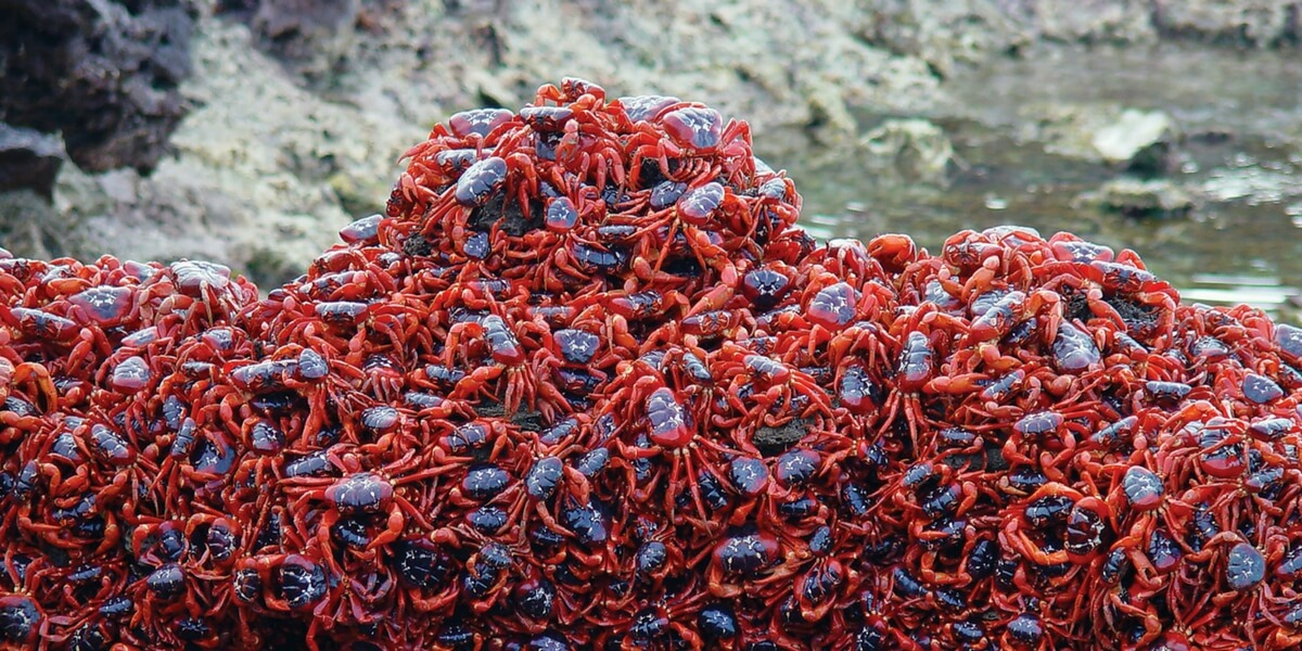 animalislands-crabs.jpg