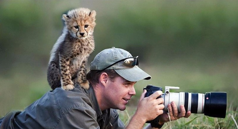 Animal Photographer