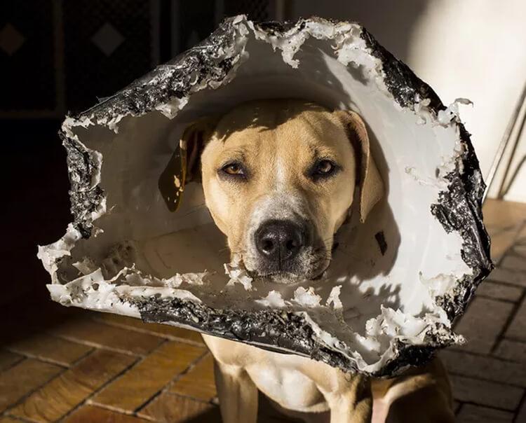 art dog cone thing.jpg