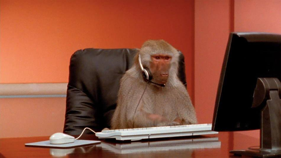 baboon at computer.jpg