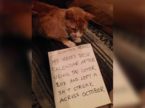 A Catastrophic Calendar