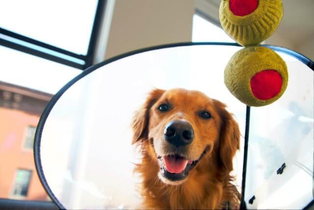 bartending doggie dog.jpg