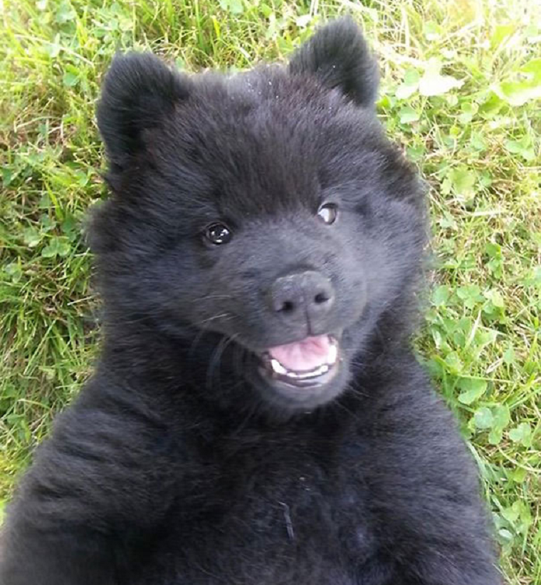 This Bear Puppy