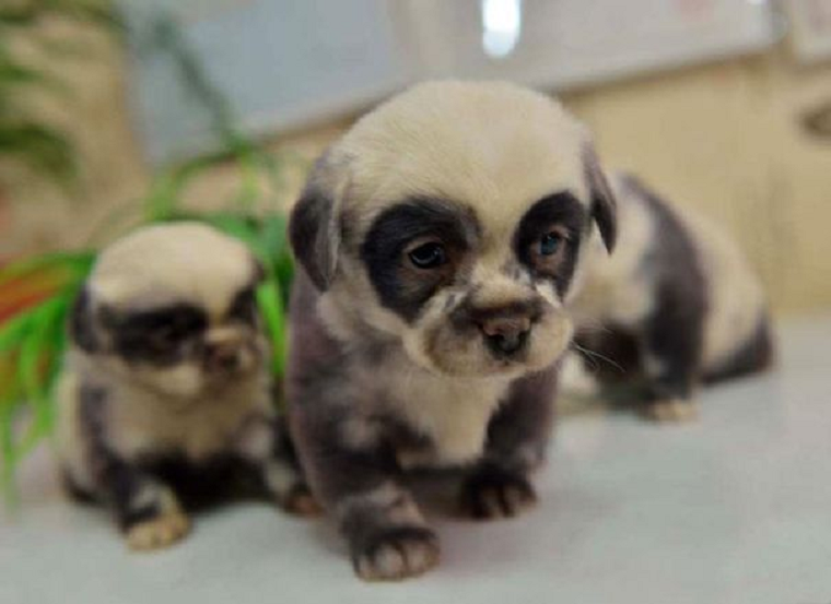 bear puppies in disguise