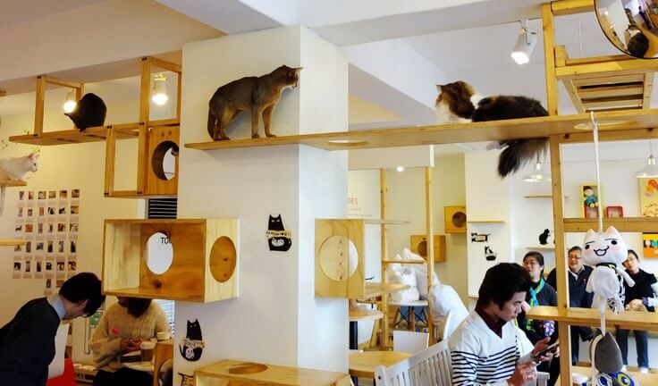 brooklyn cat cafe.jpg