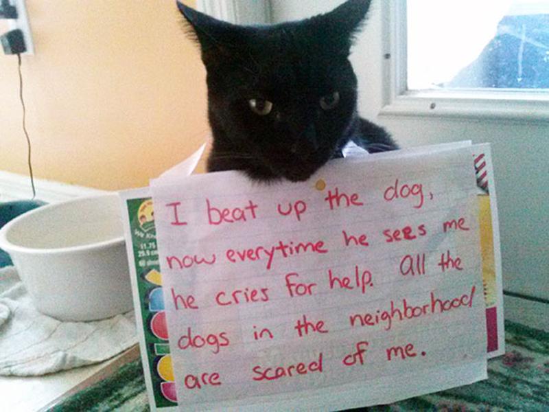 Neighborhood Bully