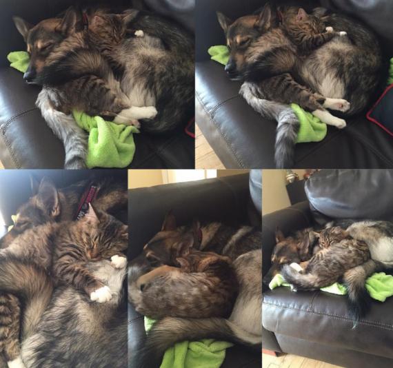 cat and puppy cuddling