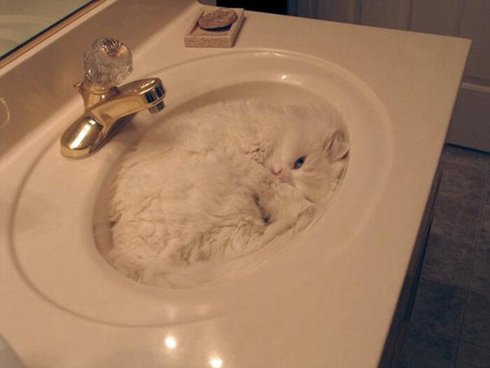 cat-sleeping-sink.jpg
