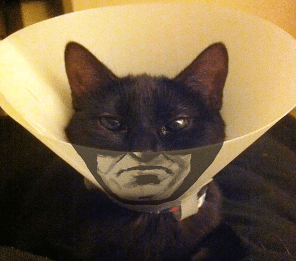 catman to the rescue.jpg