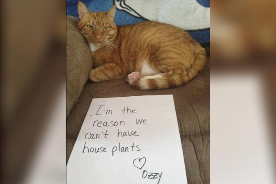 House Plant Killer