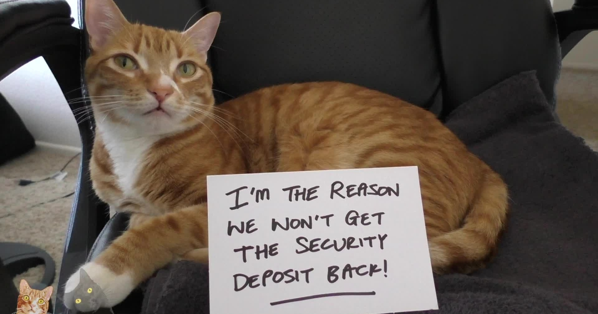 Say Goodbye To The Security De-paws-it