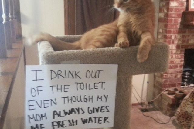 Toilet Water Cat Strikes Again