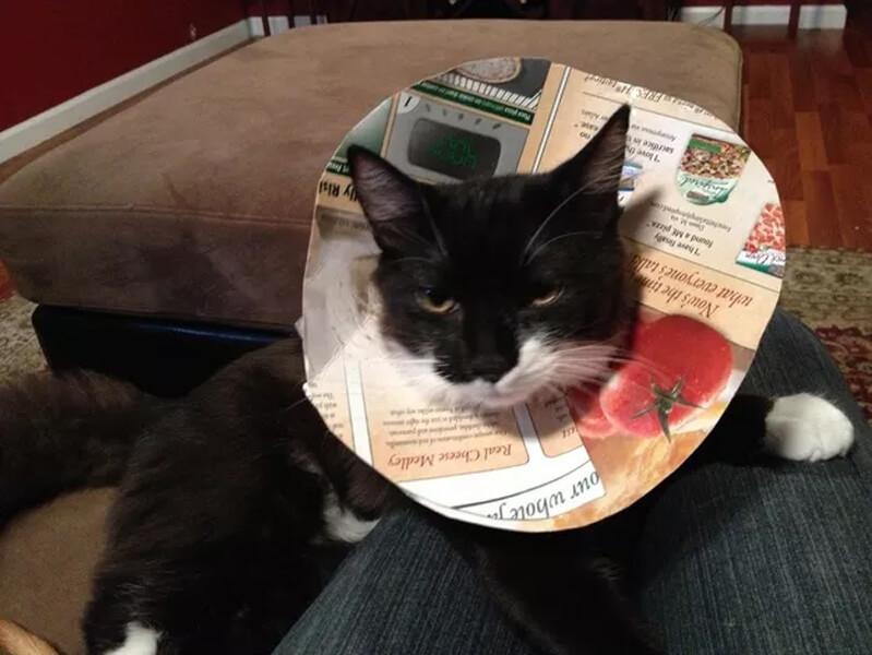 catty conne.jpg