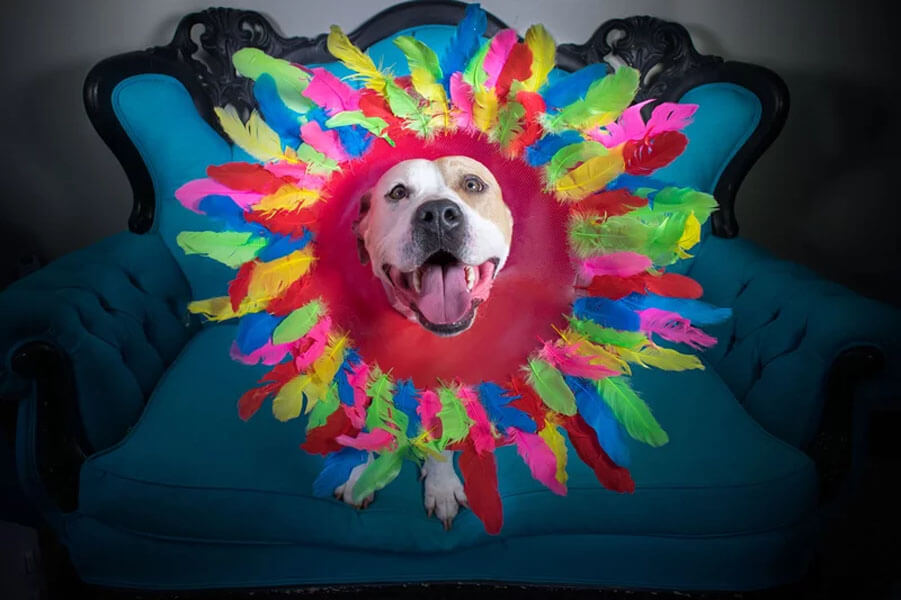 colorful dogger.jpg