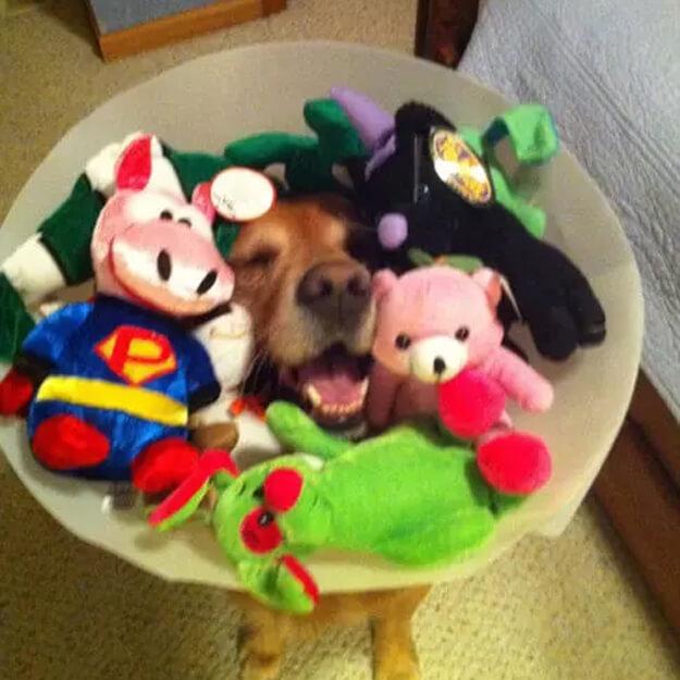 cone doggiee 4.jpg