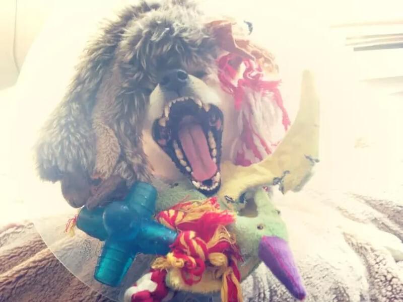 crazy happy dog cone.jpg