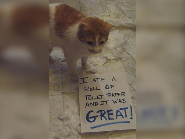 The Taste Of Toilet Paper