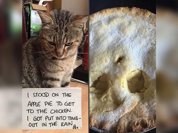 Cat Apple Pie, Anyone?