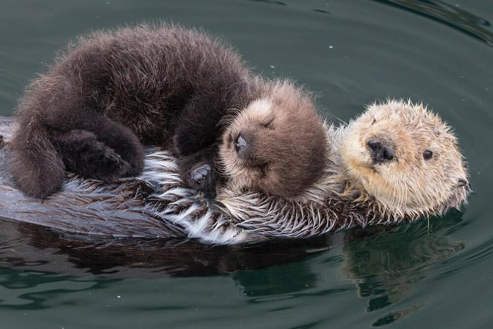 cuteseaotters.jpg