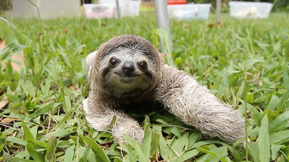 cutesloths.jpg