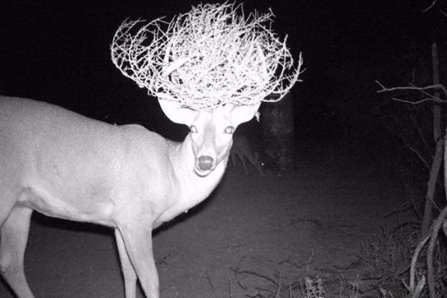 deer and tumbleweed.jpg