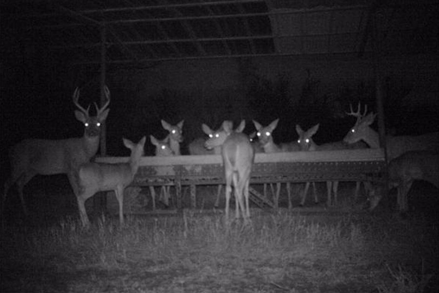 deer buffet.jpg