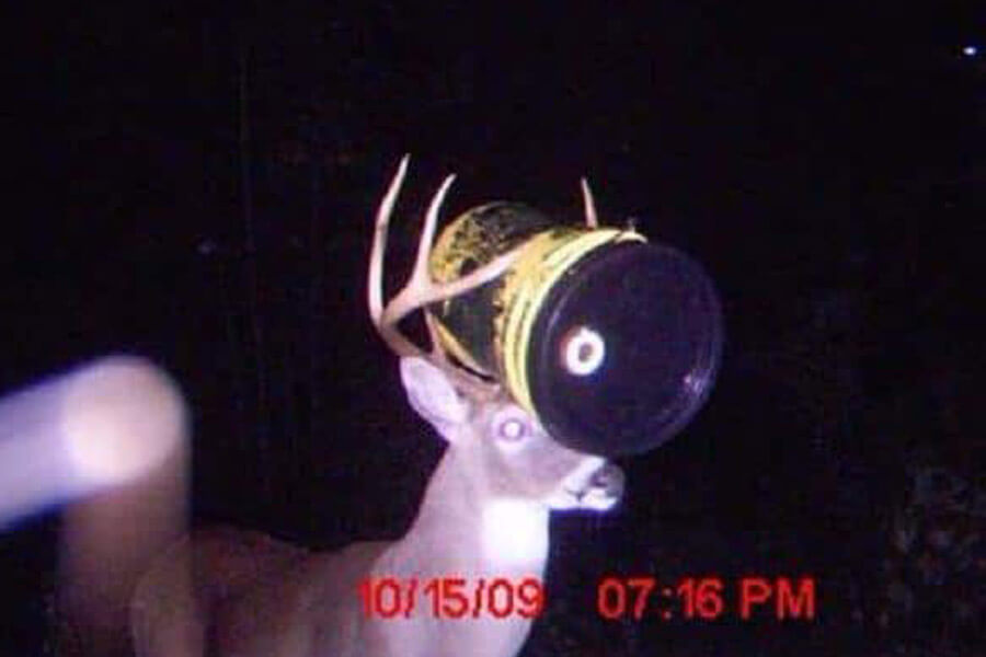 Trail Cams Capture The Most Amazing Things