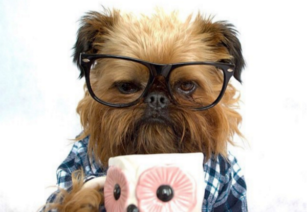 Digby Van Winkle the Hipster Dog