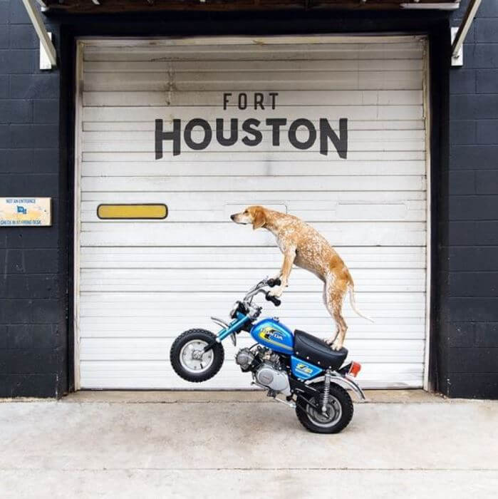 dog on motorcycle.jpg