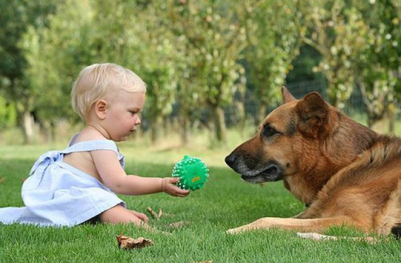 dog-with-baby-in-yard.jpg