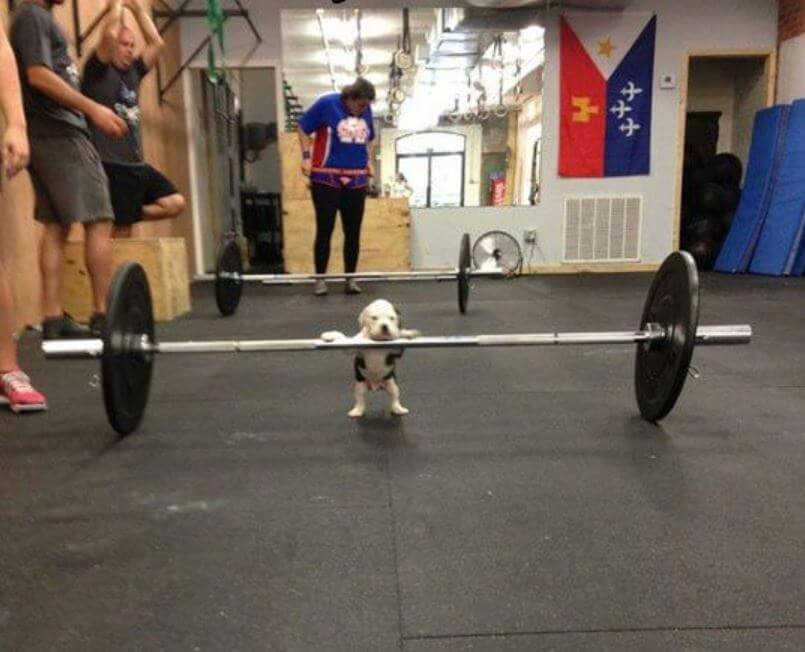 doggy lifts weights.JPG