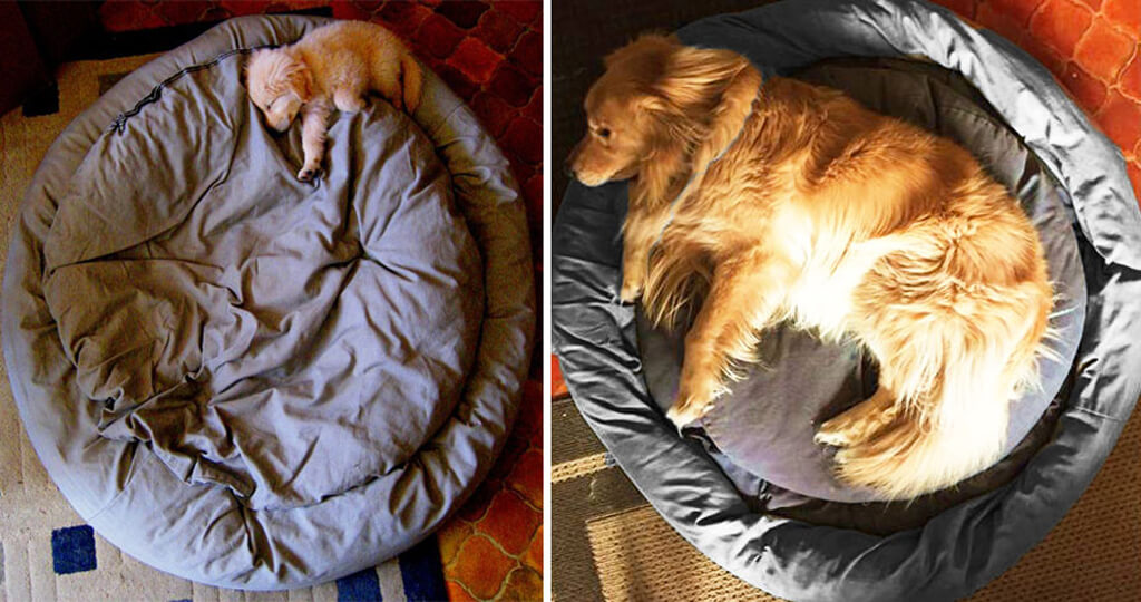 dogs-before-and-after-421__880.jpg
