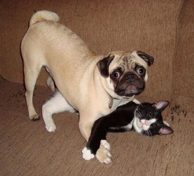 Dog + Cat = Sibling rivarly
