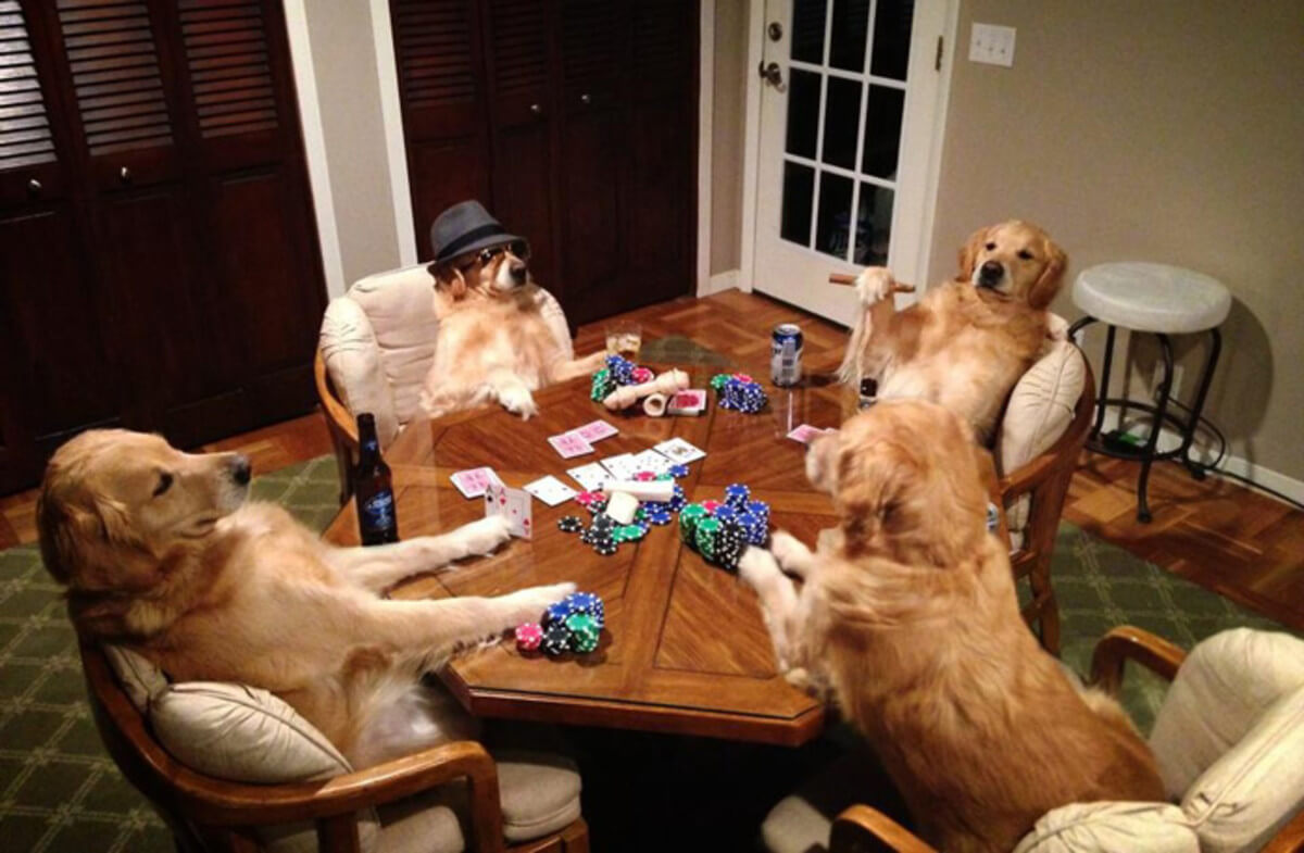 dogs gambling.jpg