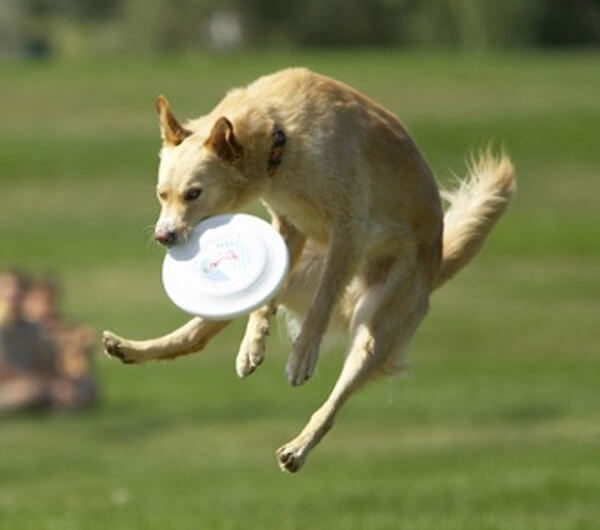dogs-in-action-12.jpg