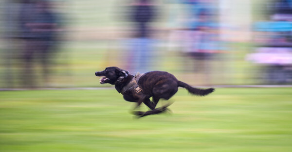 dogs-in-action-2.jpg