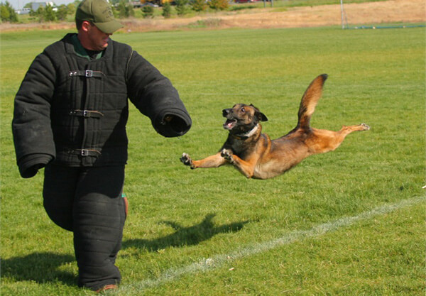 dogs-in-action-7.jpg