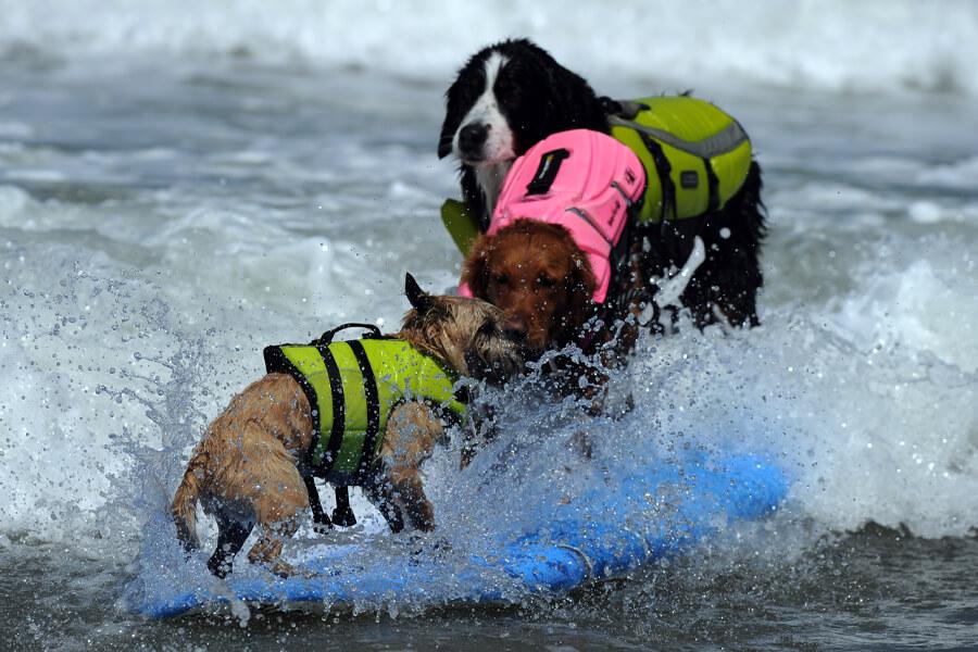 dogs in san diego.jpg