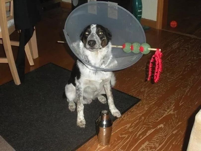 drink dogger dog.jpg