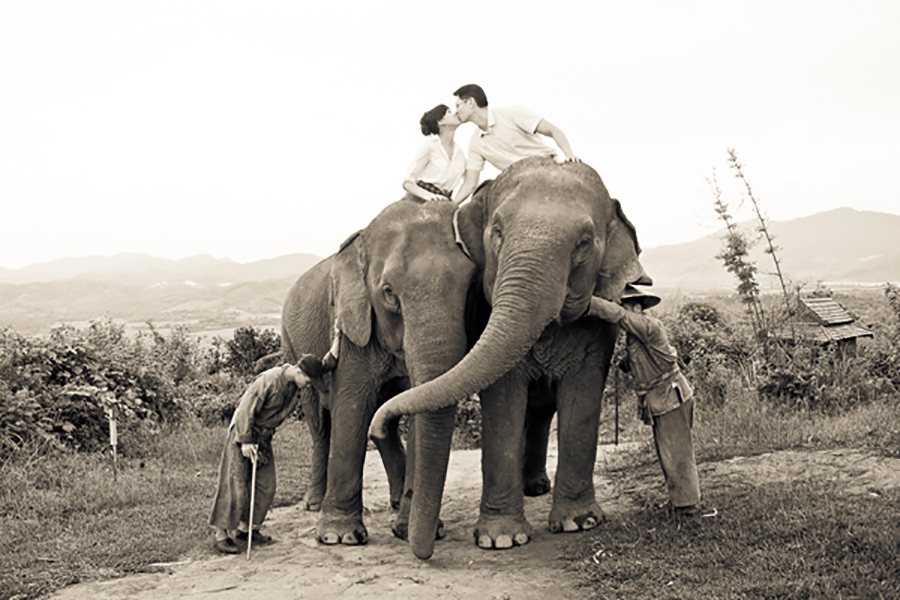 Two Elephants In Love