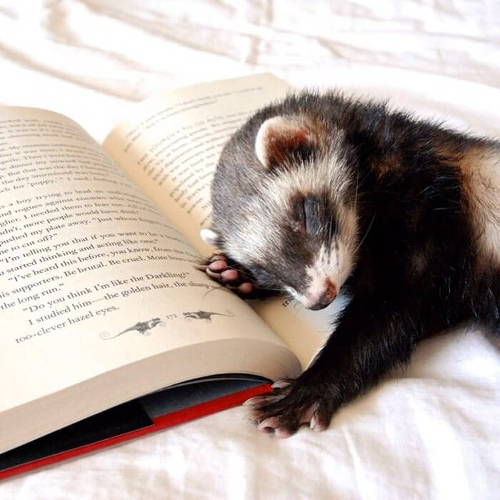 Boring Book… Yawn