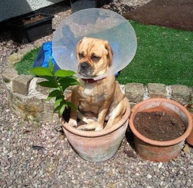 flower dogger.jpg