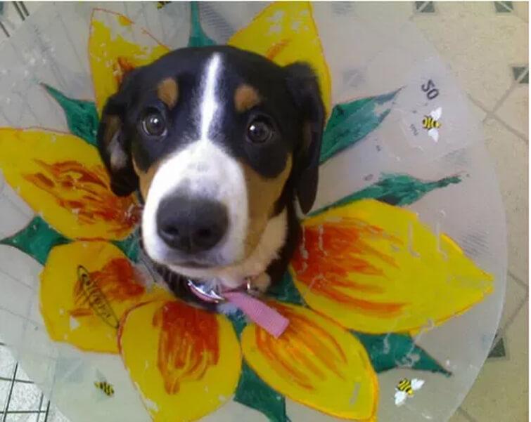 flower doggie dooder.jpg