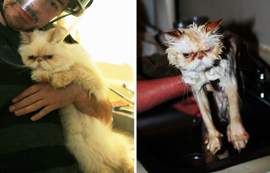 funny-wet-pets-before-after-bath-dogs-cats-52-5728b5cbc6990__700.jpg