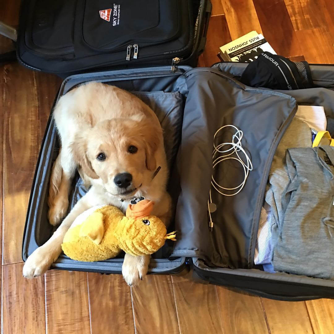 golden-in-suitcase.jpg