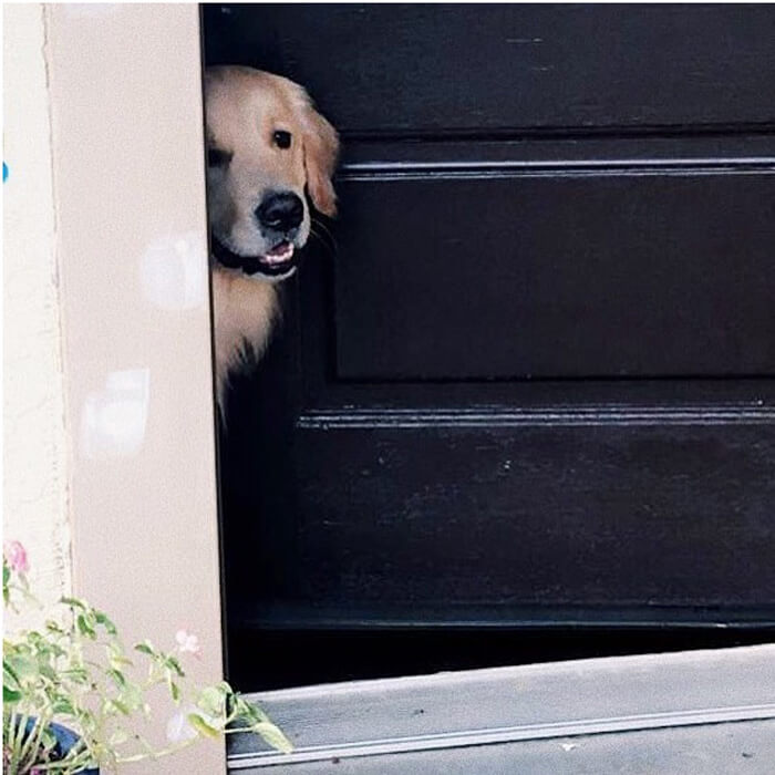 golden-peeking-door.jpg