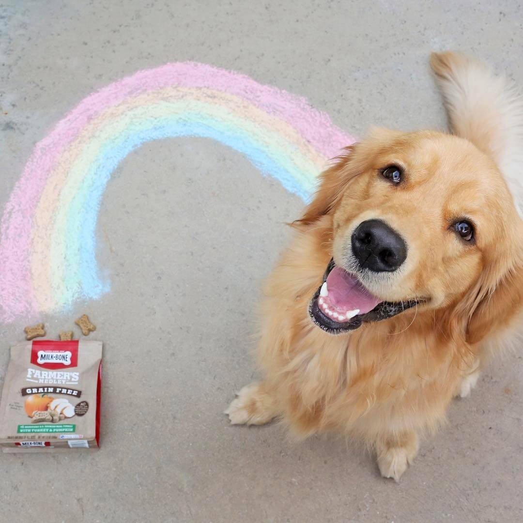 golden-rainbow-milkbones.jpg