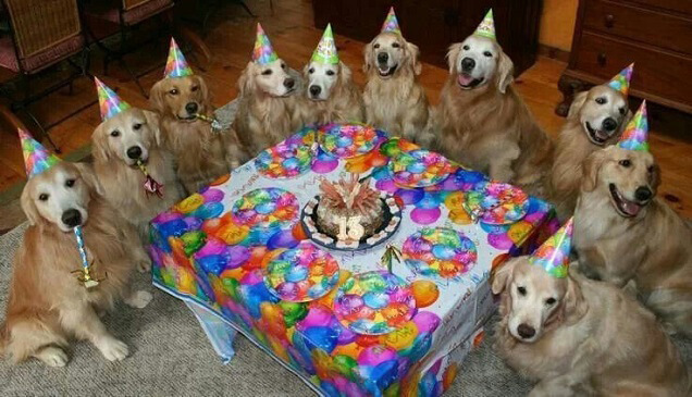 golden-retriever-party.jpg