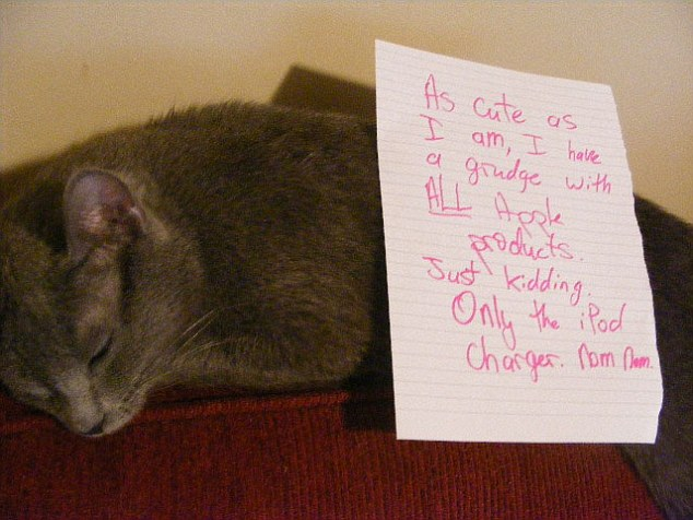 GUILTY CATS SHAMED.